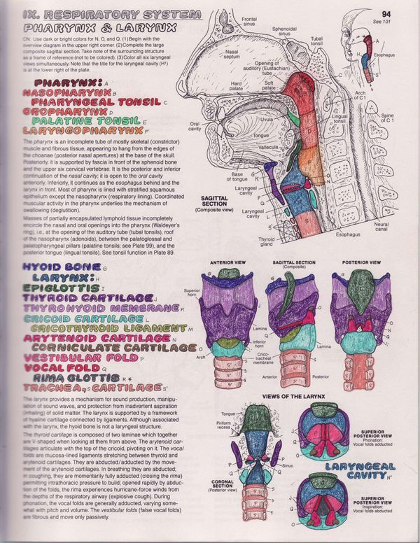 vocal anatomy 101 an introduction the liberated voice - Anatomy Coloring Books